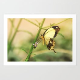 Exotic Butterfly natural beauty Art Print