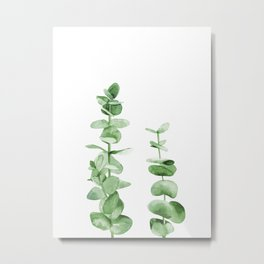 Eucalyptus leaves. Metal Print