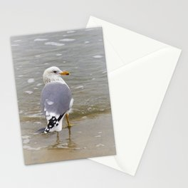 Herring Gull at the Beach by Reay of Light Stationery Cards