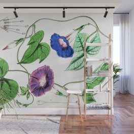 A Purging Pharbitis Vine in full blue and purple bloom - Vintage illsutration Wall Mural