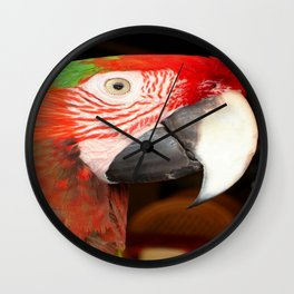 A Beautiful Bird Harlequin Macaw Portrait Wall Clock