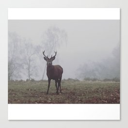 Foggy Richmond Park Canvas Print
