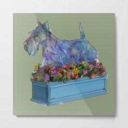 Animals in Gardens: Scotty in a Flower Box Metal Print