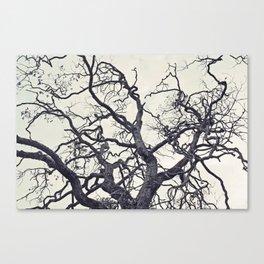 cold fall Canvas Print