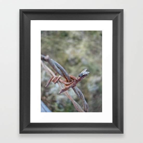 Fly Meets Barbed Wire Framed Art Print