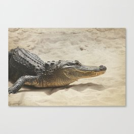 Alligator Photography | Reptile | Wildlife Art Canvas Print