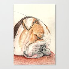 English bulldog Alfie Canvas Print
