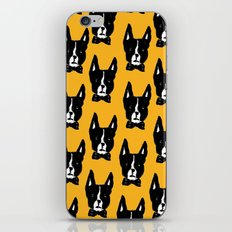 Boston Terriers iPhone & iPod Skin