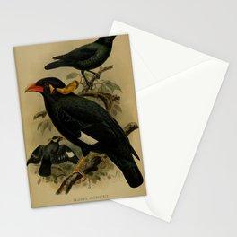 calornis altirostris Nias Hill Myna gracula robusta8 Stationery Cards