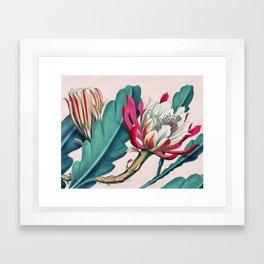Flowering cactus IV Framed Art Print