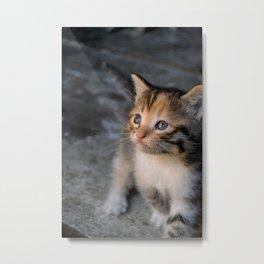 Tricolor kitten. Metal Print