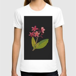 Plumeria Rubra Mary Delany Floral Paper Collage Delicate Vintage Flowers T-shirt