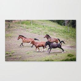 Running Herd Canvas Print