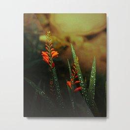 Welsh Wildflowers at Fairy Glen Metal Print