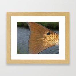 Redfish Tail Framed Art Print