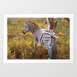Zebra Sway Art Print