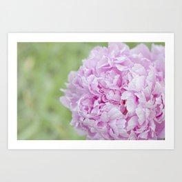 Soft Beauty Art Print