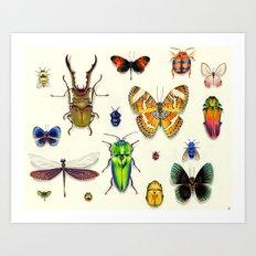 Insecta Art Print