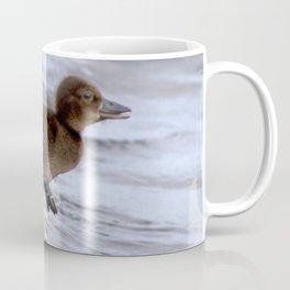Watercolor Bird, Tufted Duck 02, Lake Myvatn, Iceland, Duckling Run! Coffee Mug