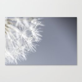 Sparkling dandelion with droplets - Flower water Canvas Print