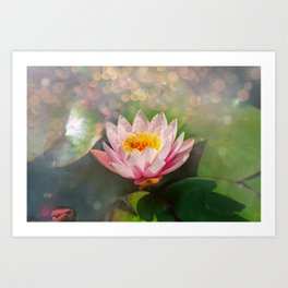 Water lily on a sunny day Art Print