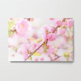 Pink sakura flowers - Japanese cherry blossom Metal Print