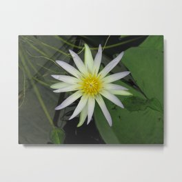 lily lillies amazon monet design flowers flower fish pond bloom blossom blossoms blooming Metal Print