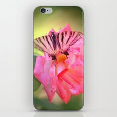 Old Scarce Swallowtail butterfly 2795 iPhone & iPod Skin