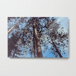 The Cathedral Pines Metal Print