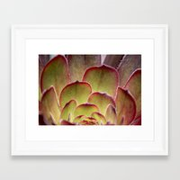 succulent Framed Art Prints featuring Succulent by Shy Photog