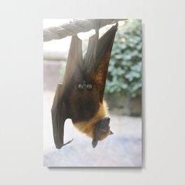 Exhibitionist Bat  Metal Print