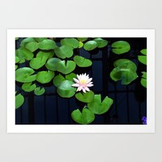 Lily pads and flower Art Print