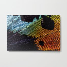 Vibrant Iridescence of The Madagascan Sunset Moth Metal Print