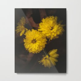 Yellow Mum Flowers in Leaves Metal Print