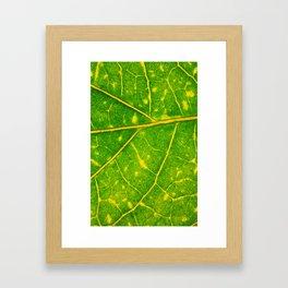 Macro Leaf 3 Framed Art Print