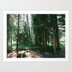 Warm Forest Art Print