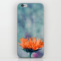 sunflower iPhone & iPod Skins featuring sunflower by Claudia Drossert