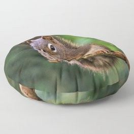 Who, Me? A Saucy Red Squirrel Floor Pillow