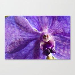 Orchid Vanda 91 Canvas Print