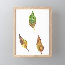 leaf colours Framed Mini Art Print