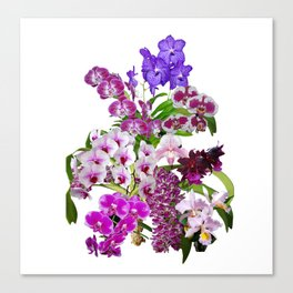 Orchids, cool and calming colors Canvas Print
