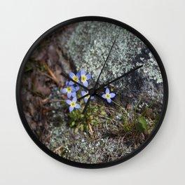 Thyme Leaved Bluets #2 Wall Clock
