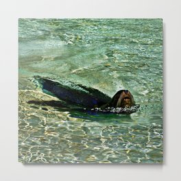 SEA LION in AQUATIC DREAMING WORLD  Metal Print