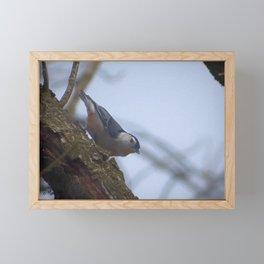 NutHatch Part I Framed Mini Art Print