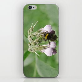Bumble bee collecting nectar from a Common Comfrey flower. Norfolk, UK. iPhone Skin
