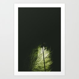 Vida nocturna Art Print