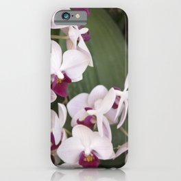 Longwood Gardens Orchid Extravaganza 1 iPhone Case