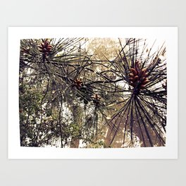 Forest rain drops Art Print