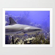 Shark Swimming Past Art Print