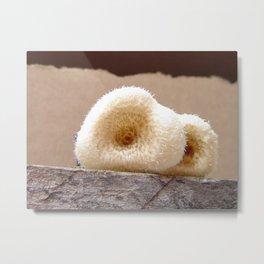 Spongy Fungus Metal Print